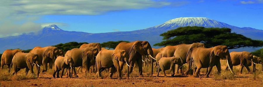 Оформление страхового полиса для поездки в Кению