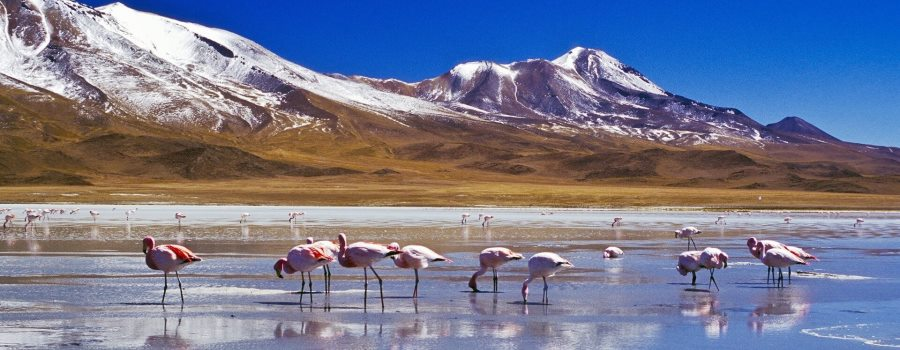 Оформление страхового полиса для поездки в Боливию