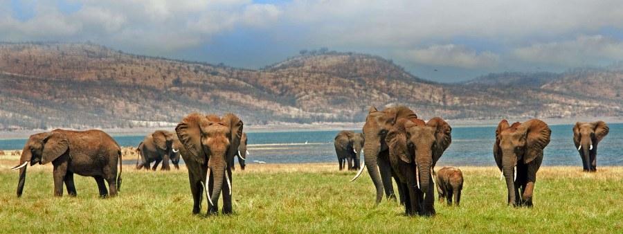 Оформление страхового полиса для поездки в Зимбабве